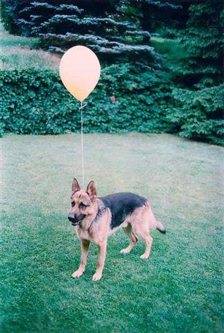 Markus Roessle – Hund