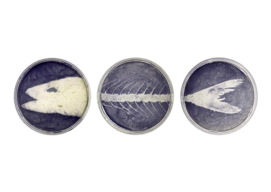 Edgar Lissel – Bakterium Vanitas, 2000-2001, 3 Bilder